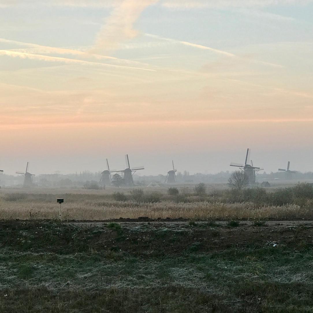 An array of windmills