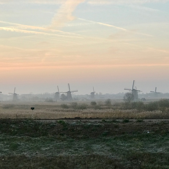 An array of windmills
