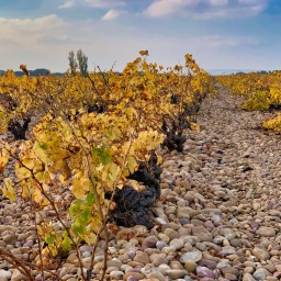 Our Wine Tour in the Southern Rhône
